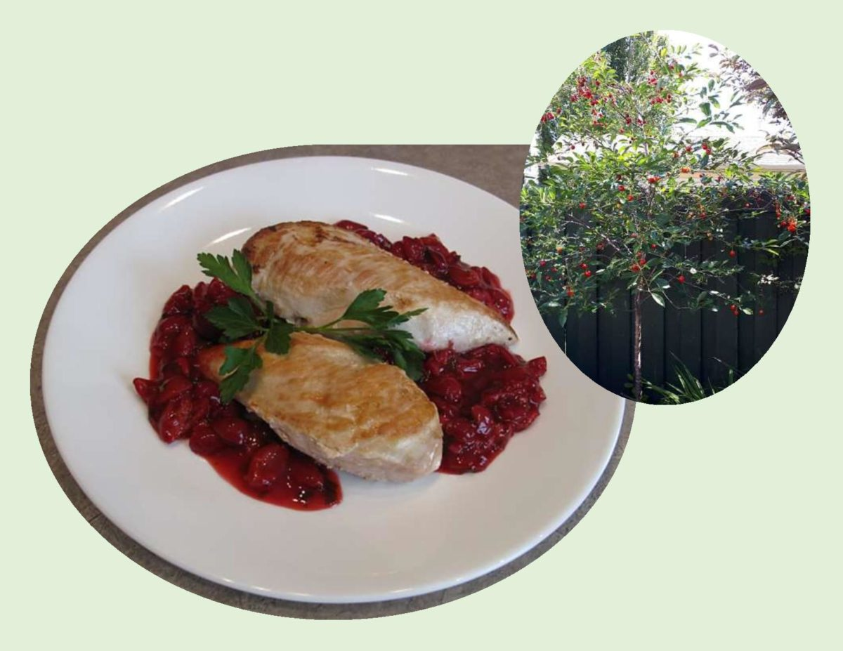Grilled Chicken Breast with Fresh Cherry Chutney